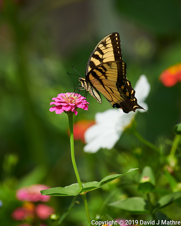 Backyard Summertime Nature in New Jersey. Image taken with a Nikon D850 camera and 100-500 mm f/5.6 VR lens