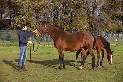 De Coninck Stijn, BEL<br /> Stal Coninkshoeve - Moerbeke 2020<br /> © Hippo Foto - Dirk Caremans<br /> 14/11/2020