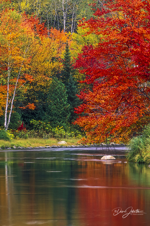 Maples and birches in peak autumn colour reflected in Junction Creek, Naughton, Ontario, Canada