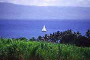 Sailboat, Maui<br />