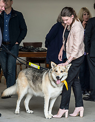 New Lib Dem MP Jo Swinson pats a dog with a Lib Dem rosette at a victory rally in Milngavie, Glasgow.<br /> <br /> © Dave Johnston/ EEm