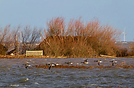 Floods of  6 12 2013 due to tidal surge showing submerged hides and flooded reserve,  Cley next the sea,  Norfolk UK
