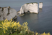 Old Harry chalk cliffs and stacks, Dorset, England