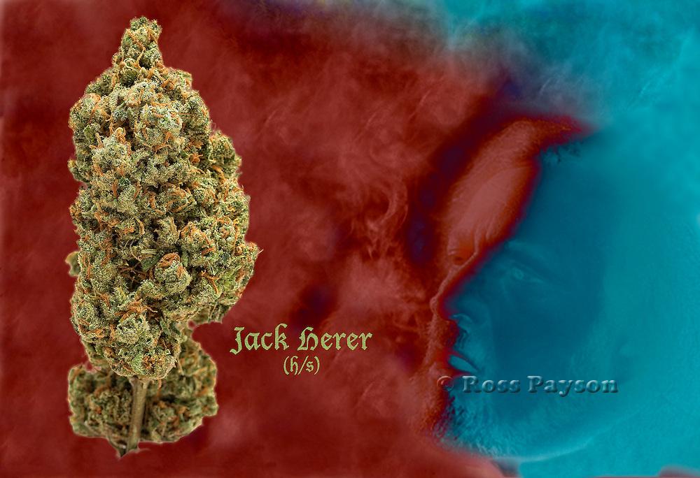 Fine art Cannabis photography