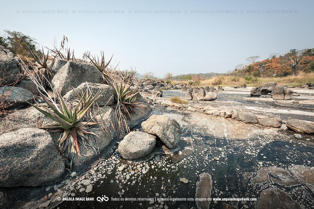 Plantas de Aloe vera nas rochas das Salinas do Sumbe a caminho para Gabela. Kwanza Sul, Angola