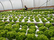 Local Farming on the island is one of the most important activity to make the island surviving.<br /> Even if Saint Helena is a Volcanic Island the land is very dry and makes difficult to grow vegetable.