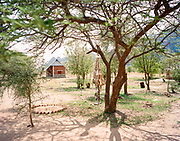 """NUBA MOUNTAINS, SUDAN – JUNE 9, 2018: The remains of the 2014 parachute bomb that destroyed much of Hieban Bible Institute and killed six children from the same family is displayed hung from a tree within compound's perimeter. Four other adults also perished nearby during the raid from bombs dropped by high flying cargo planes repurposed by the Sudan Armed Forces, which regularly carry out inaccurate but devastating bombing campaigns in predominantly civilian areas.<br /> <br /> In 2011, the government of Sudan expelled all humanitarian groups from the country's Nuba Mountains. Since then, the Antonov aircraft has terrorized the Nuba people, dropping more than 4,080 bombs on hospitals, schools, marketplaces and churches. Today, vestiges of the Antonov riddle the landscapes of daily life, where more than 1 million Nuba live in famine conditions – quietly enduring the humanitarian blockade intended to drive them out of the region. The skies are mostly clear. Yet the collective memory of the bombings remains an open wound, and the Antonov itself a persistent threat. So frequent were the attacks that the Nuba nicknamed the high flying aircraft and its dismal hum: """"Gafal-nia ja,"""" they would declare, running to the hillsides. """"The loss of appetite has come."""""""