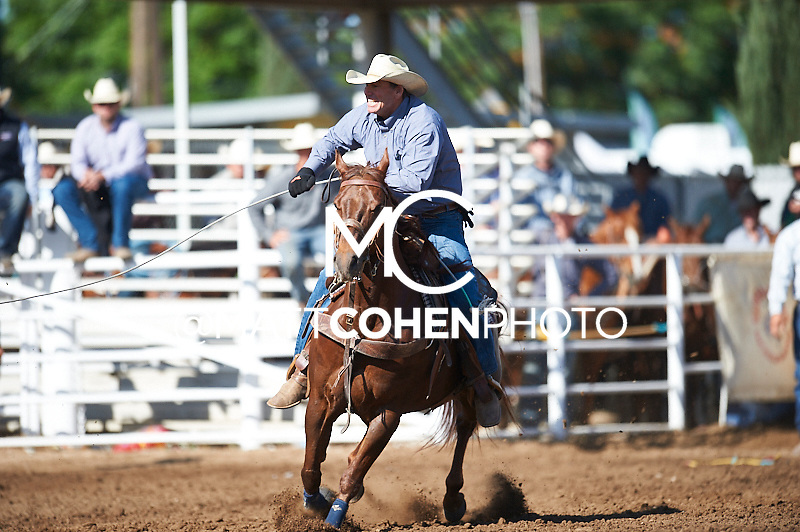 Team roper Walt Rodman of Galt, CA competes at the Clovis Rodeo in Clovis, CA.<br /> <br /> <br /> UNEDITED LOW-RES PREVIEW<br /> <br /> <br /> File shown may be an unedited low resolution version used as a proof only. All prints are 100% guaranteed for quality. Sizes 8x10+ come with a version for personal social media. I am currently not selling downloads for commercial/brand use.