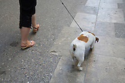woman letting out her fox terrier