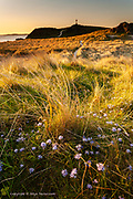 Late Spring flowers, bursting colour through evening sun-lit grass at the far end of Llanddwyn Island on Anglesey.