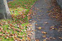 Fallen autumn leaves on suburban footpath in Dublin Ireland