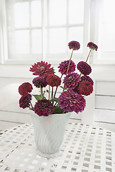 Maroon peony flowers in vase on table at glass house, Bavaria, Germany
