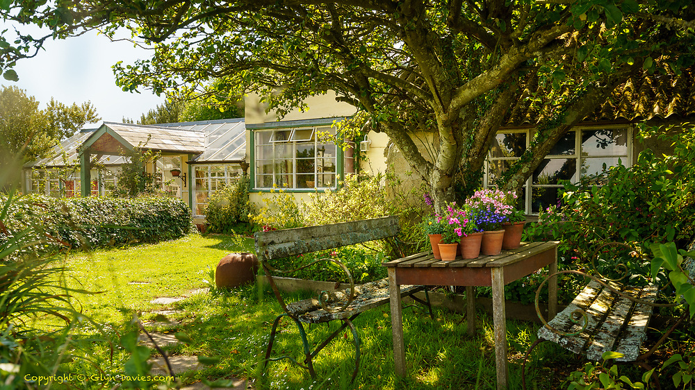 Almost stumbled across this gorgeous Cornish country garden, gentle shade keeping fresh potted plants from the summer heat. There was the gentlest buzz of bees and flies and the occasional rustle of leaves as a puff of air caught the branches. I thirsted for a cool cider. There are moments when I feel that I'm being absorbed by a place, and this was one of them.
