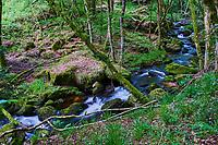 France, Saône et Loire (71), Roussillon en Morvan, Les gorges de la Canche dans le parc naturel du Morvan // France, Burgundy, Saone-et-Loire, Morvan park, Canche gorge