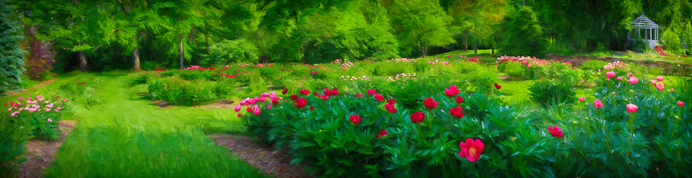 Trail leads the eye through a formal peony garden framed by deciduous and evergreen trees and a gazebo.  Soft glow double exposure montage with impressionistic painted effects, blended with a seven-image composite panorama.