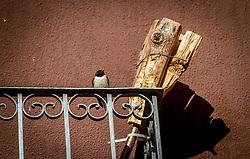 24-05-2016 SPA: BvdGF WeBike2ChangeDiabetes Challenge, Perarrua<br /> Dag 4  Pont de Suert – Castejon de Sos / 1 zwaluw maakt nog geen lente