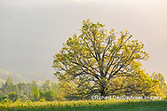 66745-04812 Sunrise in Cades Cove in spring Great Smoky Mountains National Park TN