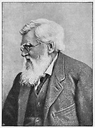 Alfred Russell Wallace (1823-1913) c1895. Welsh naturalist whose memoir, which Darwin saw in 1858, caused Darwin to modify his theory of evolution.