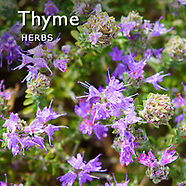 Thyme Pictures | Thyme Food Photos Images & Fotos