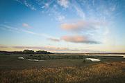 Blue sky and reedbeds in lake Kaņieris in summer sunrise, Kemeri National Park (Ķemeru Nacionālais parks), Latvia Ⓒ Davis Ulands   davisulands.com