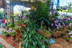 August 2, 2017 - Medelin, Colombia - Picture of the 'Fair of Flowers' at the Jardin Botanico Medellin Joaquín Antonio Uribe in Medellin, Colombia, South America, on 2 August 2017. (Credit Image: © Daniel Garzon Herazo/NurPhoto via ZUMA Press)