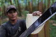 Arturo Villar, Ngäbe member of COOBANA, plants banana tree shoots. COOBANA, Finca 51, Changuinola, Bocas del Toro, Panamá. September 3, 2012.