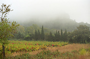 A view over the vineyard and the La Clape mountain in fog, at harvest time Domaine Pech-Redon, Coteaux du Languedoc la Clape, Narbonne, Herault, Languedoc-Roussillon, France
