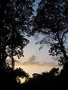 Nubes y atardecer | Dos árboles enamorados.<br /> <br /> Edición de 5 | Víctor Santamaría.