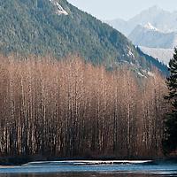 Skagit River, Washington.  Photo by William Byrne Drumm.