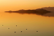 Birds float in the calm water of the Great Salt Lake off of Antelope Island State Park as the water glows as the sun sets. Braley/Stock
