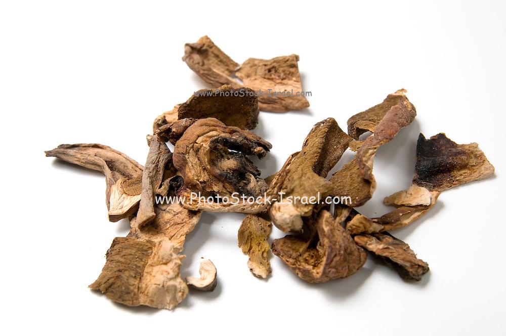 Dried porcini mushrooms Boletus edulis.