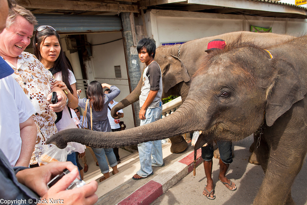 """10 JULY 2011 - DAMNOEN SADUAK, RATCHABURI, THAILAND:  Tourists walk by an elephant used for street begging in Damnoen Saduak, Thailand. The Thai countryside south of Bangkok is crisscrossed with canals, some large enough to accommodate small commercial boats and small barges, some barely large enough for a small canoe. People who live near the canals use them for everything from domestic water to transportation and fishing. Some, like the canals in Amphawa and nearby Damnoensaduak (also spelled Damnoen Saduak) in Rajburi  province (also spelled Ratchaburi) are also relatively famous for their """"floating markets"""" where vendors set up their canoes and boats as floating shops.    PHOTO BY JACK KURTZ"""