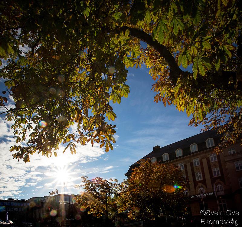 Lav sol lyser opp høstfargede trær.<br /> Foto: Svein Ove Ekornesvåg
