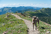 Hiking up Mt. Aeneas with the Mukundans and Sugar