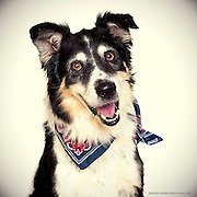 Great dog portraits by photographer Anne Chadwick Williams.