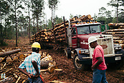 """CHILDERSBURG, AL – AUGUST 3, 2018: Lonnie Bowden (left), 61, prepares for work during a final harvest of Loblolly Pine on a tract located 50 miles outside of Birmingham. <br /> <br /> Rick Nelms, a private forestry consultant, is hired by landowners, appraisers and banking institutions alike to evaluate and oversee timber harvests, which supply the raw material needed by various mills in the region to create everything from paper products and furniture to telephone poles and plywood. """"We can grow timber pretty fast down here to supply the demand for wood fiber,"""" Nelms said. """"The big problem with Southern Yellow Pine though is there's not enough competition for it. There's too much supply for the demand."""" Nelms, who has been working in the industry for over thirty years, says landowners used to get $500 for an acre of """"thinning"""" –the partial removal of timber intended to improve the growth and value of the residual stand. """"Now, it's around $150 per acre,"""" Nelms said. """"The trouble is it's 15 years before you know if it's a good idea or not. So as soon as that tree hits the ground it gets complicated in a hurry. Years ago, it was a pretty good investment. Now people just don't want to do it. And some people are hung, because that's all they got."""" CREDIT: Bob Miller for The Wall Street Journal<br /> TIMBER_AL"""