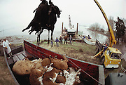 USA_AG_BEEF_30_xs.Cattle drowned during a Sacramento River Delta flood caused by a levee break are loaded onto a truck with a crane. USA.