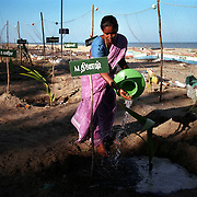 A woman waters coconut saplings in Nagappattinam, the southeastern coast of India. The saplings commemorate victims of the tsunami..The December 26, 2004 tsunami killed thousands of people along this coast, smashing boats, roads and houses and tearing thousands of families apart. .Picture taken February 2005 in Nagapptinam, Tamil Nadu, India, by Justin Jin