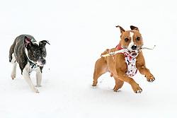The Beast From the East, Dunfermline, 01/03/2018<br />Oscar and Daisy enjoy the snow<br />(c)Craig Brown  Edinburgh Elite media