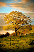 2005_Tyringham_Tree