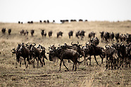 Best of The Mara Migration 2021