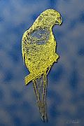 A digitally derived golden rendition of an actual photograph of a Rainbow Lorikeet (Trichoglossus haematodus) from Cairns, Queensland, Australia.
