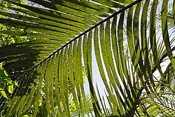Mekong Delta Vegetation