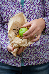 Putting unripe tomatoes into a paper bag with a banana to encourage ripening