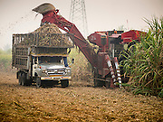 09 FEBRUARY 2015 - THA MAI, KANCHANABURI, THAILAND: A mechanical sugarcane harvester clear cuts a field in Kanchanaburi province of Thailand. Thailand is the world's second leading sugar exporter after Brazil. The 2015 sugarcane harvest in Thailand is expected to fall about 5% compared to the 2014 harvest because of a continuing drought in Southeast Asia. Brazilian production is also expected to fall this year because of ongoing drought in Brazil. Australia, the number 3 sugar exporter, is also expected to see a smaller harvest this year because of continuing draught in Australia.   PHOTO BY JACK KURTZ