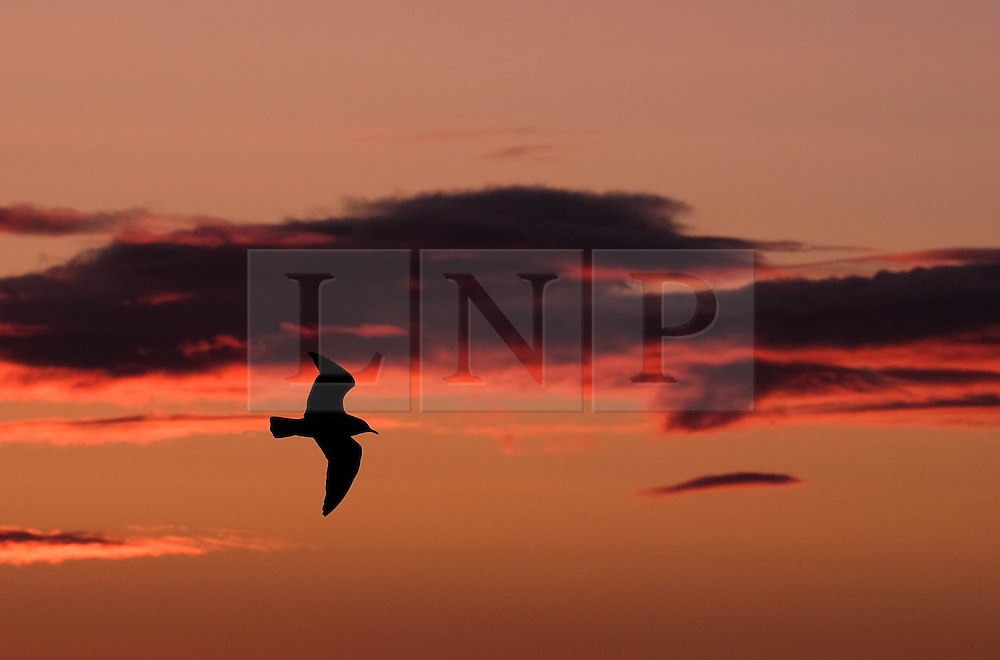 © Licensed to London News Pictures. 19/02/16<br /> Redcar, UK. <br /> <br /> A seabird flies over the beach at Redcar at sunrise in Cleveland. <br /> <br /> Photo credit : Ian Forsyth/LNP