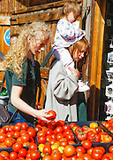 Alaska. Fairbanks. Women and child choose tomatoes for food at an outdoor Farmers market in summer.