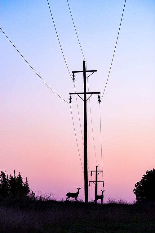 Opposing energies merge in dawn's break, Johnson City, Texas
