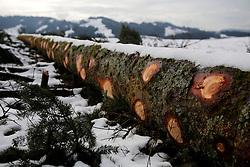 SWITZERLAND LANGNAU JAN12 - A felled tree near Langnau im Emmental, Switzerland.....jre/Photo by Jiri Rezac....© Jiri Rezac 2012