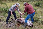 Heidi Anderson and Bernie McGowan get ready to field dress Heidi's 2019 subsistence hunt caribou.